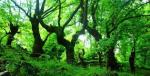 Ευρυτανία: Τριανταφυλλιά (1.817μ.). Μικρό «Πανταβρέχει». Via Ferrata Μαύρης Σπηλιάς. Μονοπάτια του Τόρνου.& Προυσού.